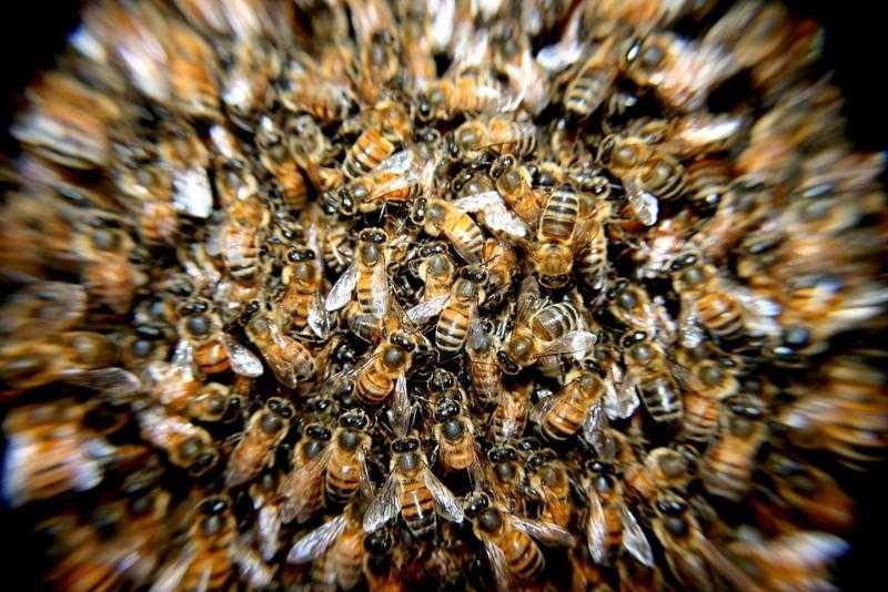В Катав-Ивановске рой пчел атаковал семью во время велопрогулки