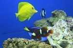 Уникальный челябинский аквариум открылся после ремонта